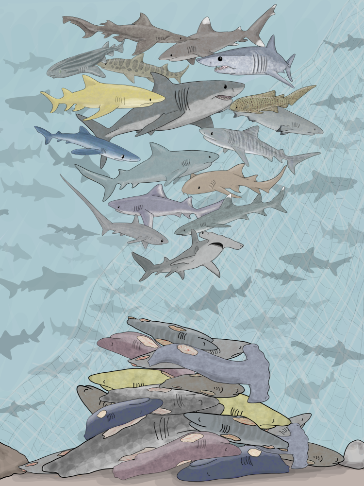 Digital artwork showing a selection of sharks swimming above a pile of finless shark bodies, to bring awareness to the shark fin trade.