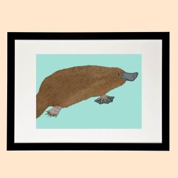 Platypus Print - Amazing Animals of Australia Collection