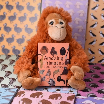 Amazing Primates Fact Cards with Orangutan Soft Toy Gift Set
