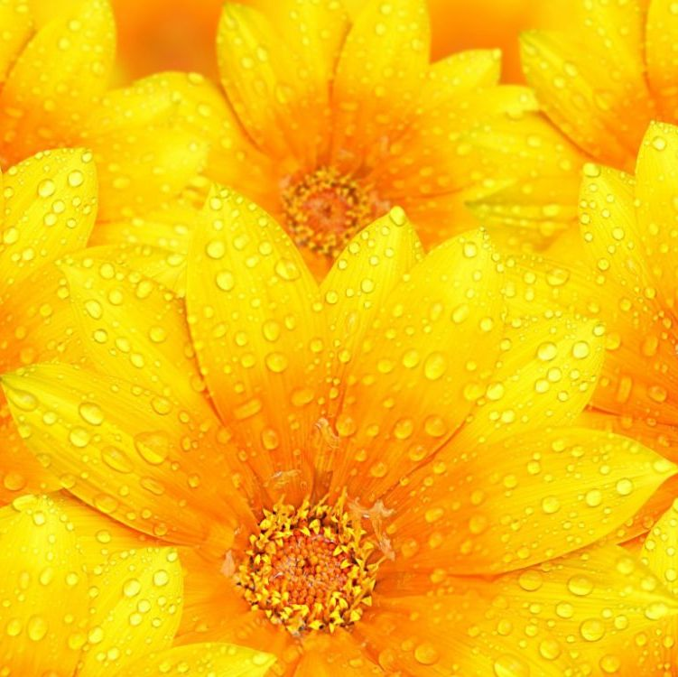 Yellow - Orange Buttons