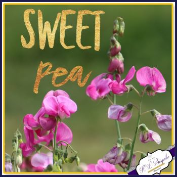 Sweet Pea Flower Soy Wax Melts - Highly Scented Floral Wax Tarts - Floral Scented Wax Melts - Sweet Vegan Friendly Wax Melt - Eco Friendly