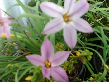 IPHEION CHARLOTTE BISHOP