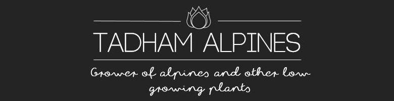 Welcome to Tadham Alpines, site logo.