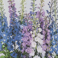Delphinium Pacific Giants Seed