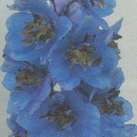 Blue Jay Seed