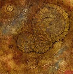 Original collagraph print of fossils by Jane Duke