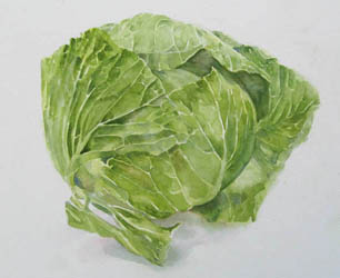 cabbage