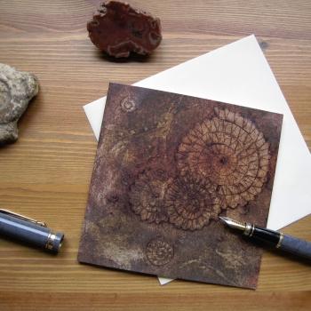 Ammonites III card