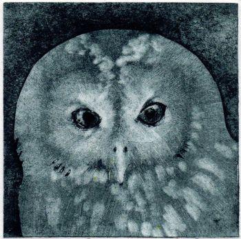 Tawny Owl (2/30)