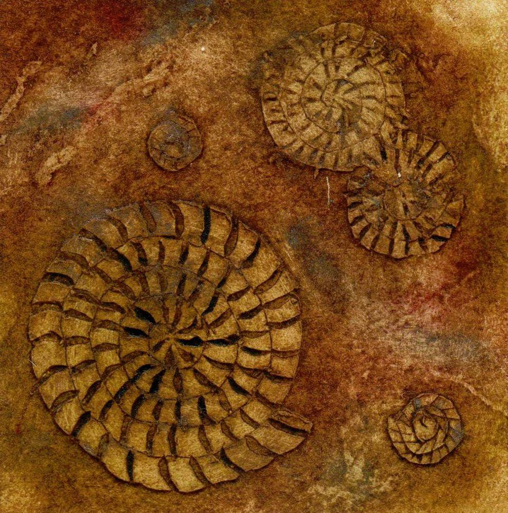 Ammonites II (4/20)