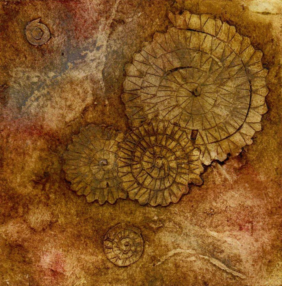 Ammonites III (4/20)