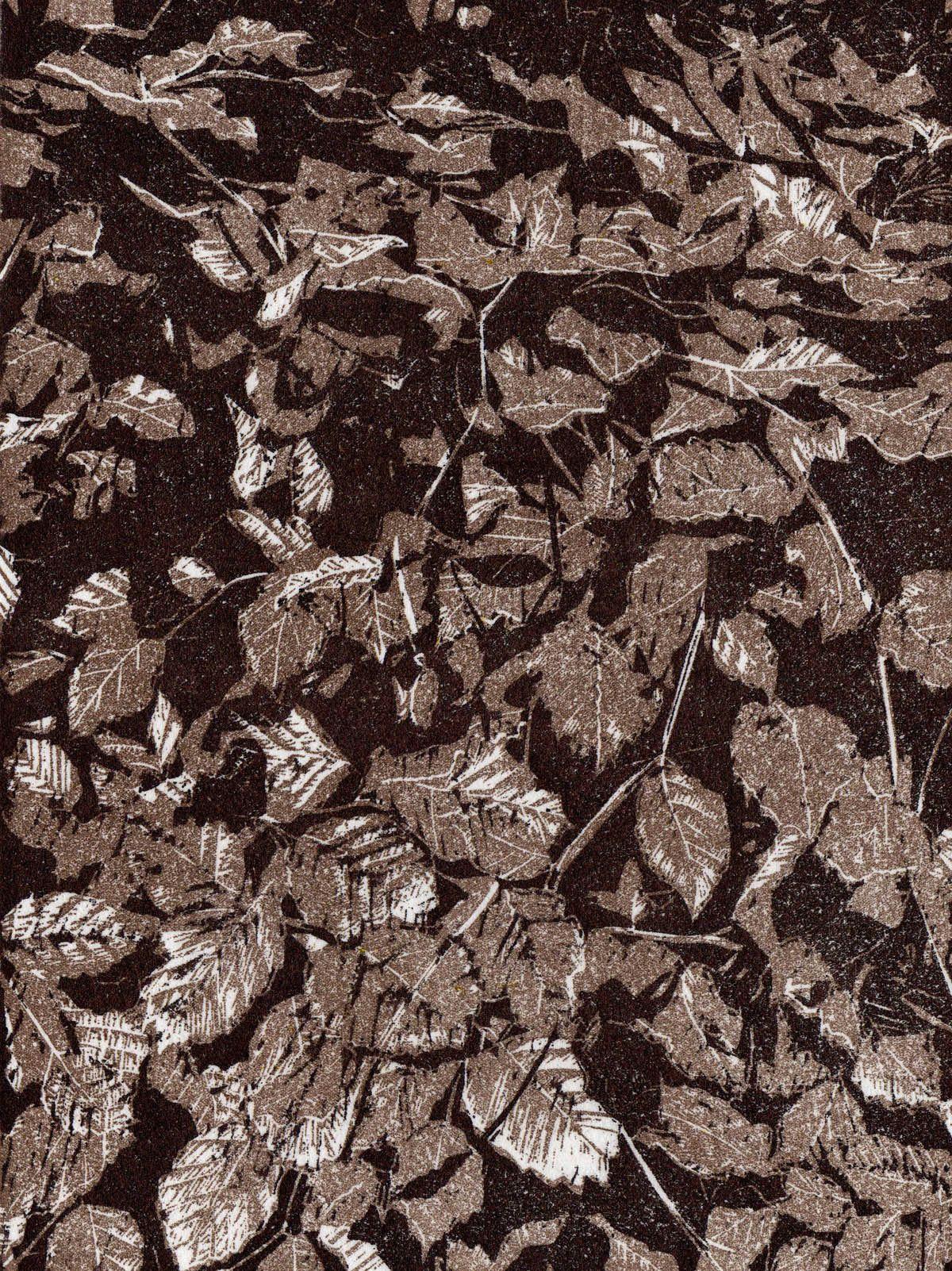 Bronze Beech