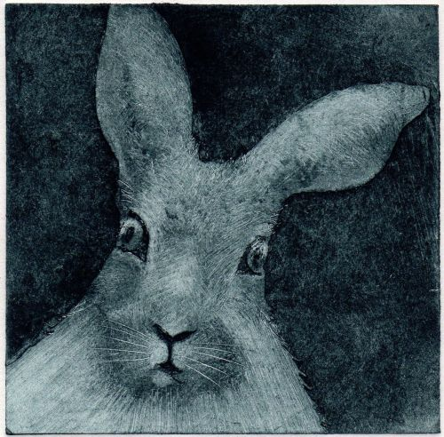 Curious Hare (15/30)