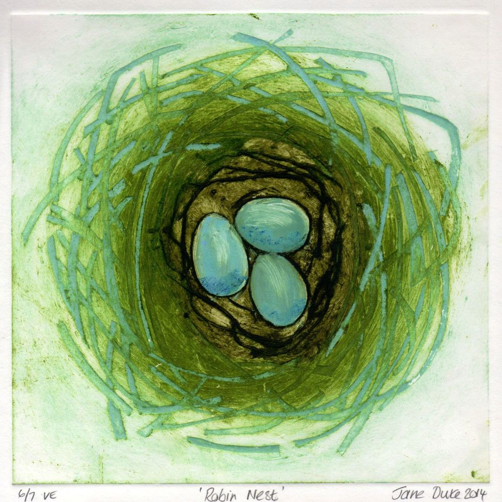 Robin Nest (6/7)