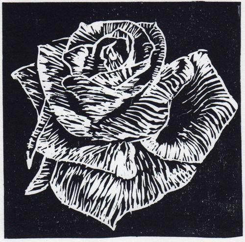 Black Velvet Rose