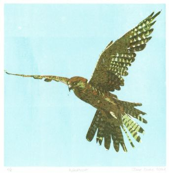 Windhover 8/8