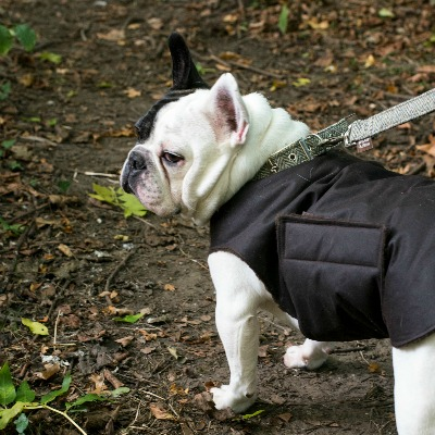 Dog Coat Waxed Cotton
