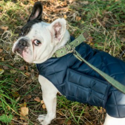 Dog Coat Waterproof Quilted