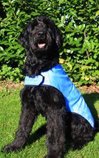 Prestige Pets Cool Dog Cooling Coat - Blue - Medium 50cm  (Due in Shorly)