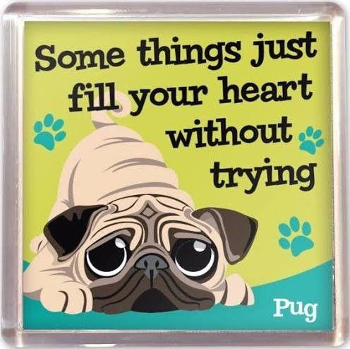 Pug Love Magnet - Arriving Soon