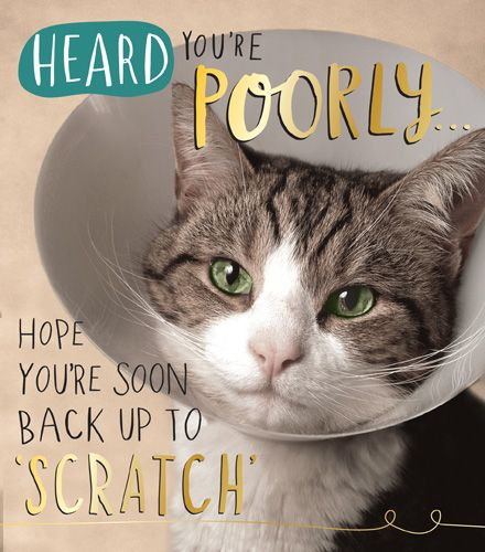 Funny Cat Get Well Soon Card - Heard YOU'RE POORLY - Hope You're SOON Back