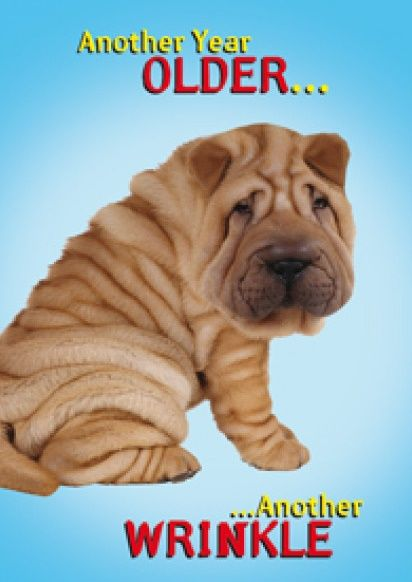 Funny Age BIRTHDAY Card - ANOTHER Year OLDER - Dog BIRTHDAY Cards - AGE Bir