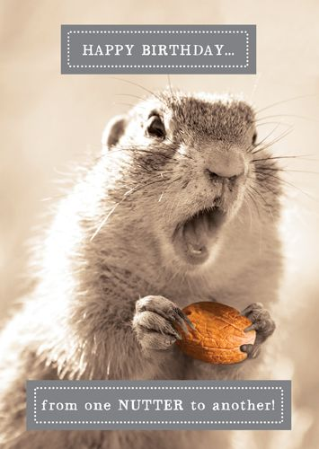 Funny Squirrel Cards - FROM One NUTTER To ANOTHER - Happy BIRTHDAY Card - F