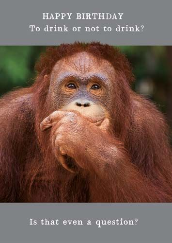 Funny Orangutan Birthday Cards - To DRINK Or Not To DRINK Is THAT Even A QU
