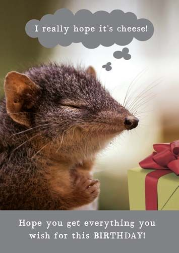 Cheesy Birthday Cards - HOPE You GET Everything You WISH For - HAPPY Birthd