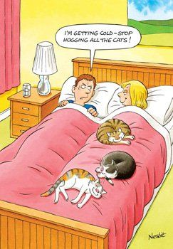 Funny Cat Birthday Cards - I'M Cold STOP Hogging All THE CATS - Bedtime COU