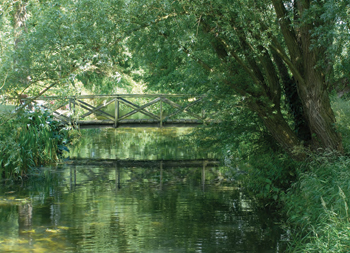 Bridge and Stream, Norfolk