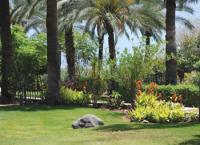 Garden near the Beatitudes, near Capernaum