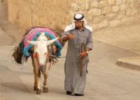 Donkey climbing the Mount of Olives, Jerusalem