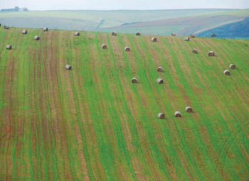 Patterns in the landscape, Telscombe village, East Sussex