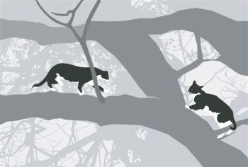 A game in the oak tree....