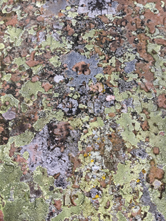Lichens on stone