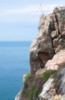 Lichens by the sea
