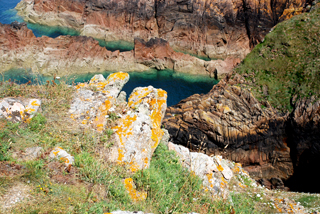 Lichens on the coast, Jersey