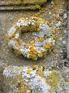 Rich lichen colonies on sculpted stone