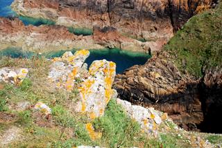 Lichens on seaside cliffs, Jersey