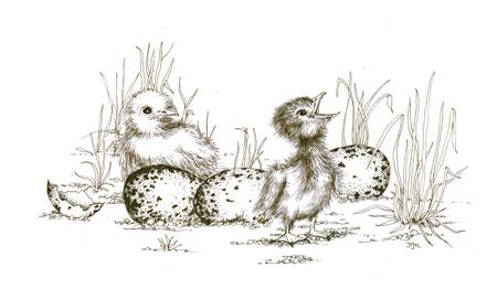 Baby Terns