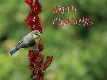 Happy Christmas Blue Tit