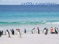 Father Christmas and penguins on the beach