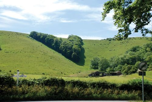The 'V' plantation, Sussex