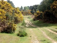 On a trail on the top of Ashdown Forest