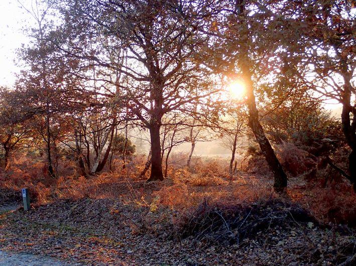 Sunlight on Ashdown Forest in autumn