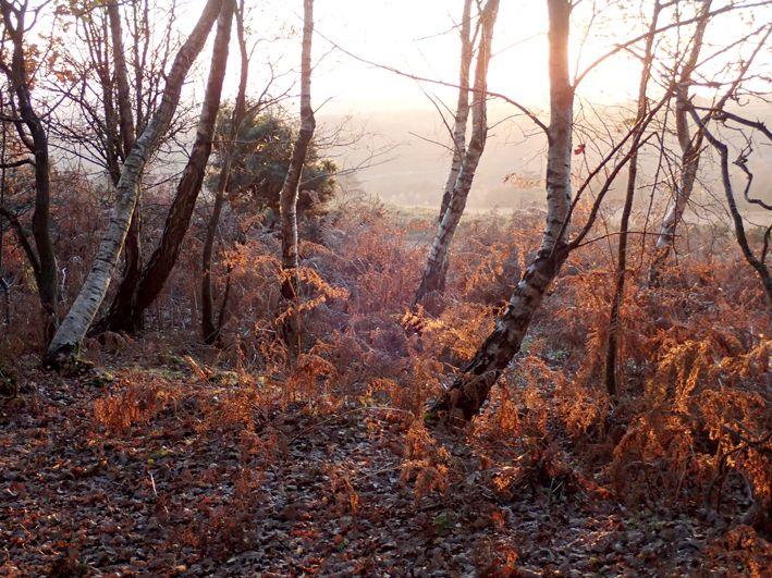 Ashdown Forest autumn
