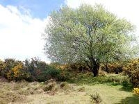 Little nook in Ashdown Forest