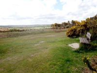 Viewpoint on Ashdown Forest