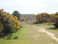 Well trodden path on the top of Ashdown Forest